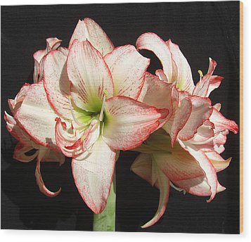 Wood Print featuring the photograph Amaryllis Group by Frederic Kohli