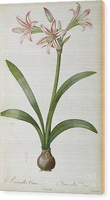 Amaryllis Vittata Wood Print by Pierre Redoute