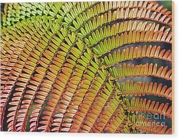 Amaumau Fern Frond Wood Print by Greg Vaughn - Printscapes