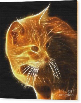Amazing Cat Portrait Wood Print by Pamela Johnson