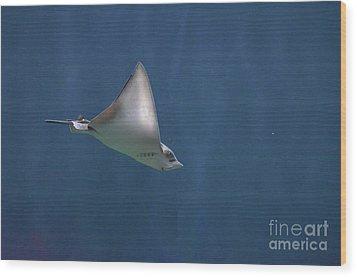 Amazing Stingray Underwater In The Deep Blue Sea  Wood Print