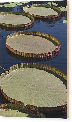 Wood Print featuring the photograph Amazonas Lily Pads II by Suzanne Gaff