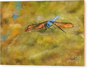 Amber Wing Dragonfly Wood Print