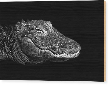 American Alligator Wood Print by Malcolm MacGregor