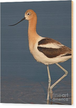 Wood Print featuring the photograph American Avocet Standing Tall by Max Allen