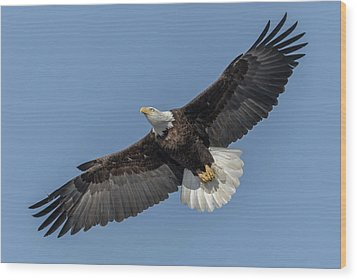 Wood Print featuring the photograph American Bald Eagle 2017-18 by Thomas Young