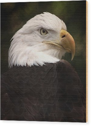 American Bald Eagle Wood Print by Joseph G Holland