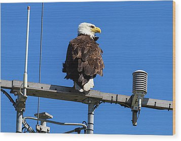 American Bald Eagle On Communication Tower Wood Print by David Gn