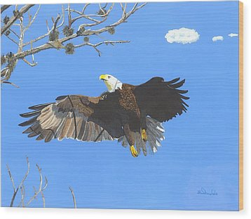 American Bald Eagle Wood Print by William Demboski