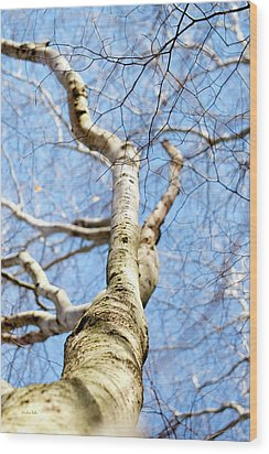 Wood Print featuring the photograph American Beech Tree by Christina Rollo