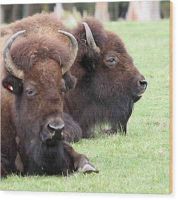 American Bison - Buffalo - 0011 Wood Print by S and S Photo