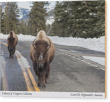 American Bison In Yellowstone National Park Wood Print by Carol M Highsmith