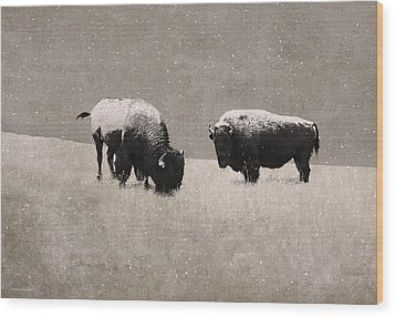 American Bison Wood Print by Ron Jones