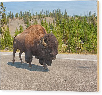 Wood Print featuring the photograph American Bison Sharing The Road In Yellowstone by John M Bailey