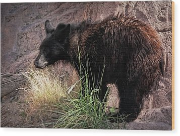 American Black Bear Cub Wood Print by Elaine Malott