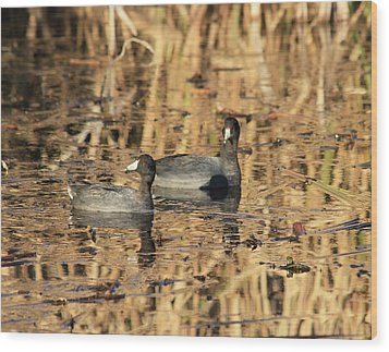 Wood Print featuring the photograph American Coots by Jerry Battle