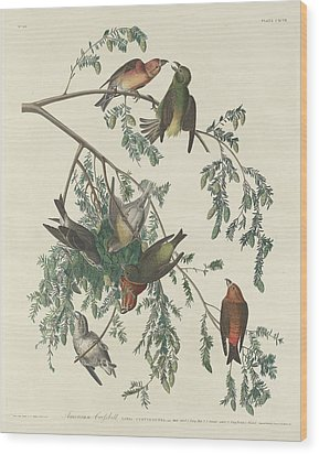 American Crossbill Wood Print by Rob Dreyer