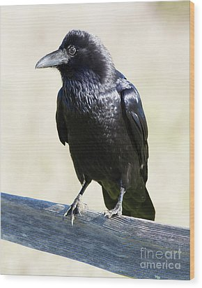 Wood Print featuring the photograph American Crow At Point Reyes National Seashore California 5dimg9286 by Wingsdomain Art and Photography