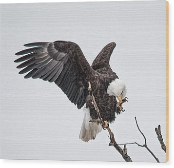 American Eagle  Wood Print by Kelly Marquardt