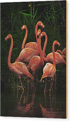 Wood Print featuring the photograph American Flamingo by Michael Cummings