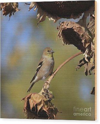 American Goldfinch Wood Print