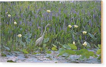 American Lotus - Great Egret Wood Print