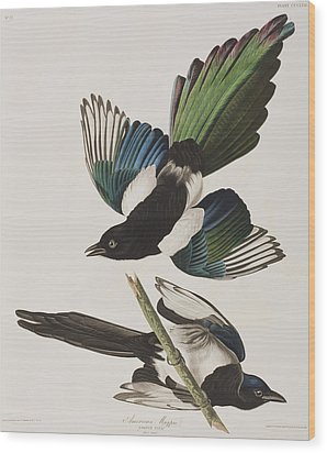 American Magpie Wood Print by John James Audubon