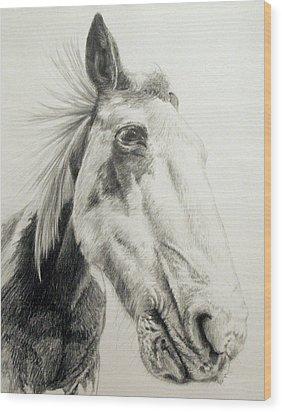 American Paint Horse Wood Print by Keran Sunaski Gilmore