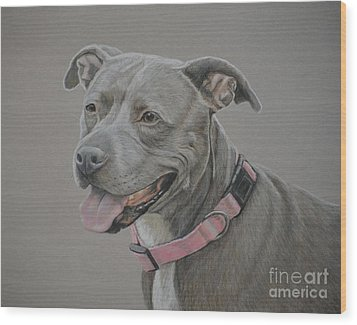 American Staffordshire Terrier Wood Print by Charlotte Yealey