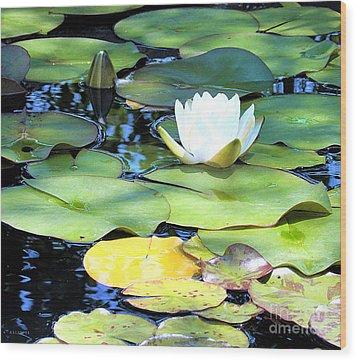 American Water Lilies Four Wood Print by J Jaiam