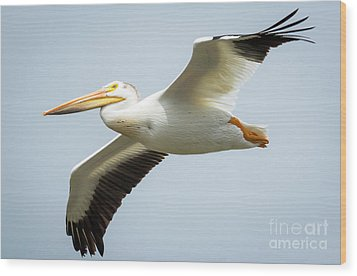 Wood Print featuring the photograph  American White Pelican Flyby  by Ricky L Jones