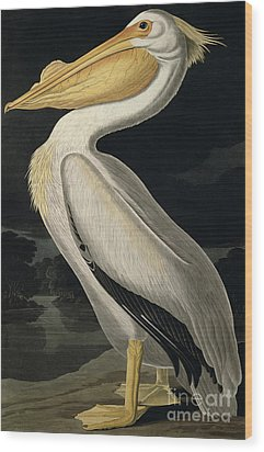 American White Pelican Wood Print by John James Audubon