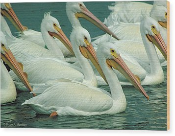 American White Pelicans Wood Print by Bruce Morrison