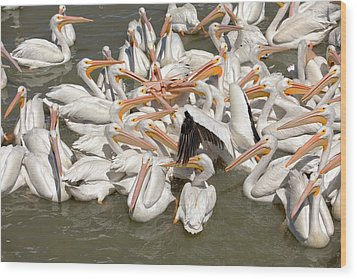 American White Pelicans Wood Print by Eunice Gibb