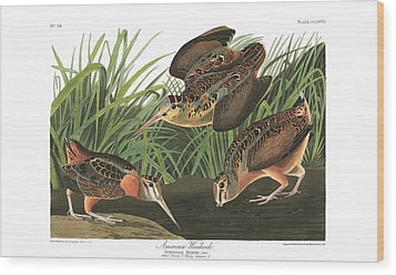 American Woodcock Wood Print by MotionAge Designs