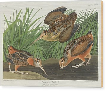 American Woodcock Wood Print