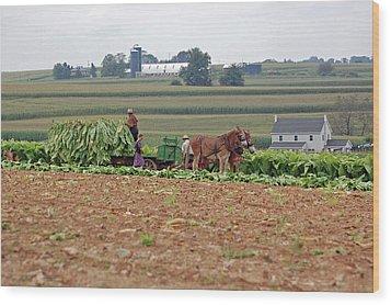 Amish Farm Harvest Wood Print by Joyce Huhra