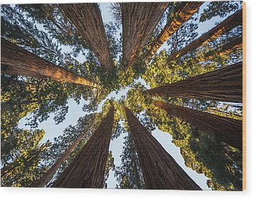 Amongst The Giant Sequoias Wood Print