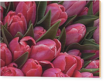 Amsterdam Red Tulips Wood Print by Jill Smith