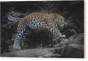 Amur Leopard On The Hunt Wood Print by Martin Newman