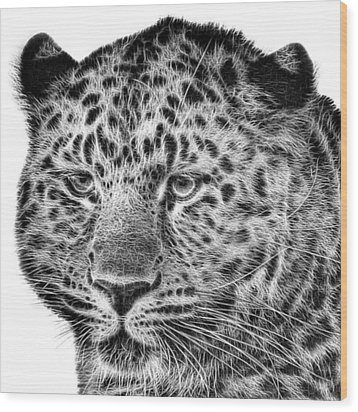 Amur Leopard Wood Print by John Edwards