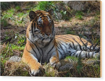 Wood Print featuring the mixed media Amur Tiger 1 by Angelina Vick