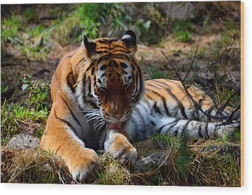 Wood Print featuring the mixed media Amur Tiger 2 by Angelina Vick