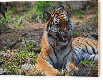 Wood Print featuring the mixed media Amur Tiger 3 by Angelina Vick