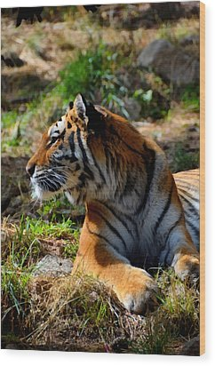 Wood Print featuring the mixed media Amur Tiger 9 by Angelina Vick
