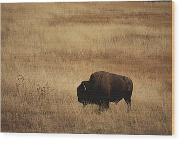 An American Bision In Golden Grassland Wood Print by Michael Melford
