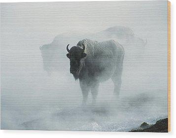An American Bison Bull Bison Bison Wood Print by Michael S. Quinton