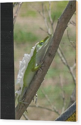 Wood Print featuring the photograph An Anole Shedding Its Skin by Jeanne Kay Juhos