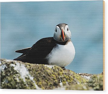 An Atlantic Puffin Wood Print by MaryJane Armstrong