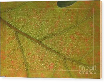 Wood Print featuring the photograph An Autumn Leaf by Jean Bernard Roussilhe